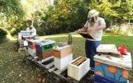 police beekeepers