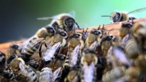 buzzbee