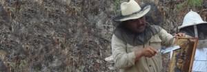 mexico beekeeper
