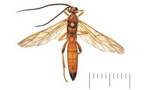 new wasp