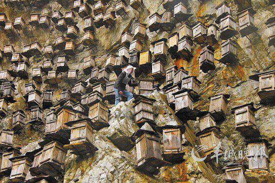 beehives in china