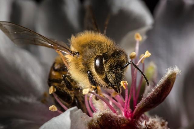 bees and rain