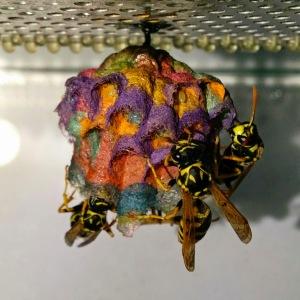 wasp-3