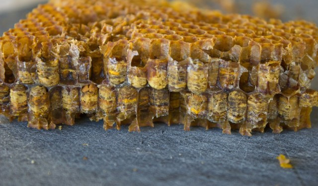 bees-producing-honey